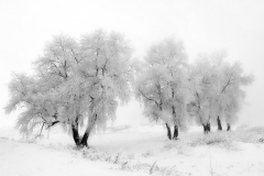 26_zima_foto_s_gnilorybov