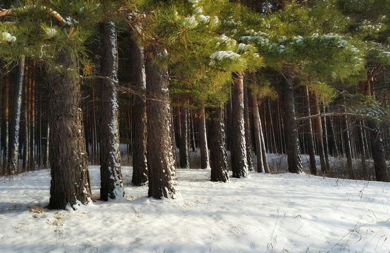Национальный парк «Шушенский бор»