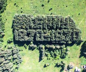 Под Красноярском нашли огромный геоглиф